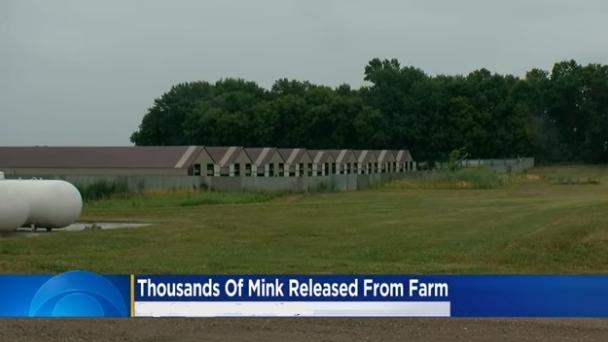 lang farms in Minnesota