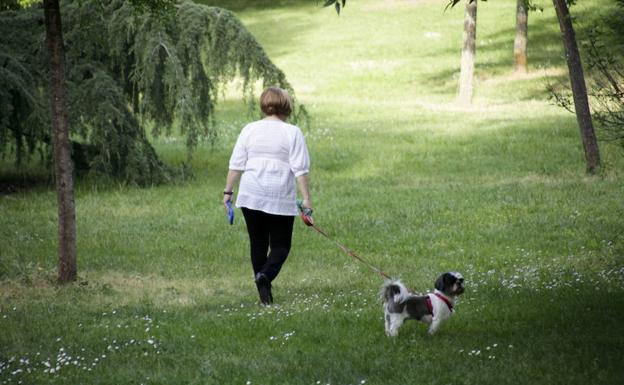 Advierten del peligro que corren perros y gatos en Cáceres por el uso devenenos