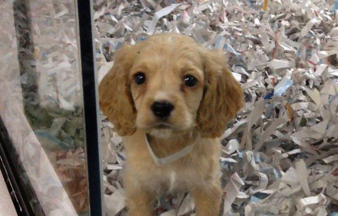 California se convierte en el primer estado en prohibir la venta de perros que provengan decriaderos