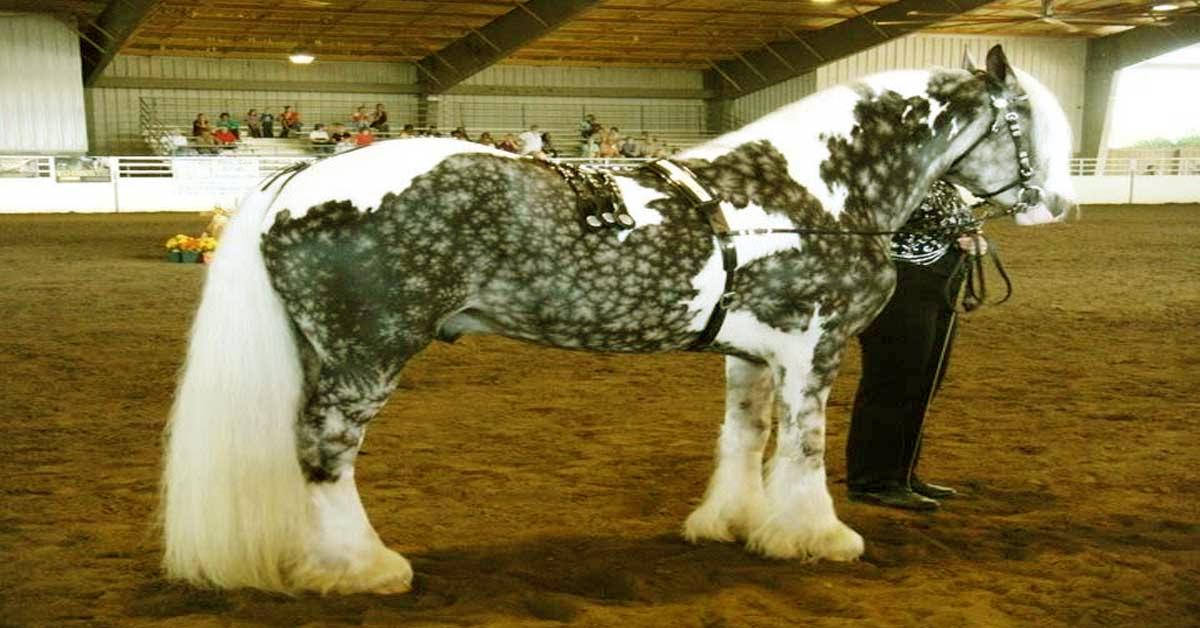 Los 24 caballos con los colores más increíbles y hermosos que hayas vistonunca