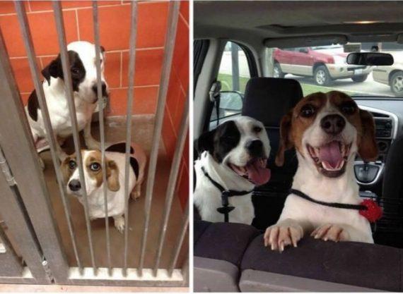 15 Fotografías del antes y después de animales que muestran por qué deberíamosadoptarlos